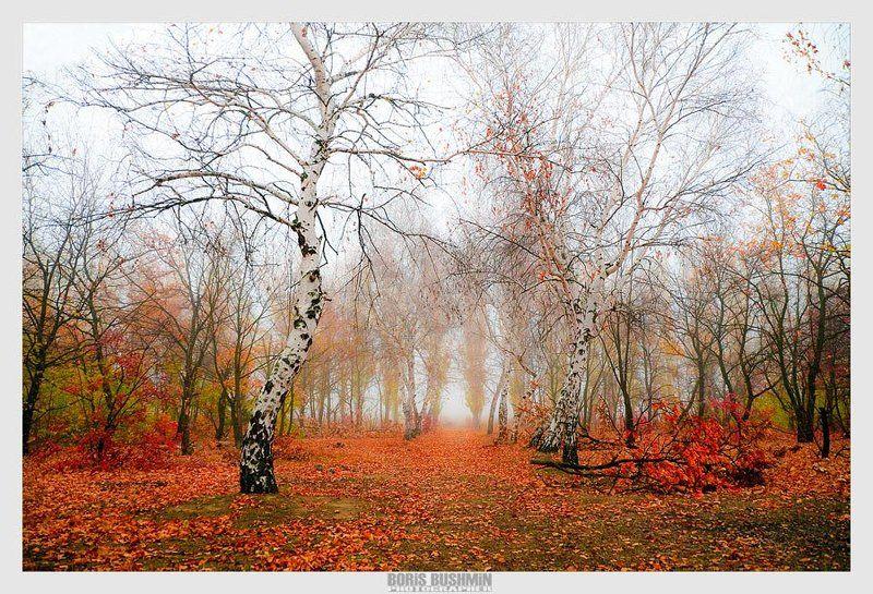 пейзаж, природа, осень, лес, листья Краски осениphoto preview