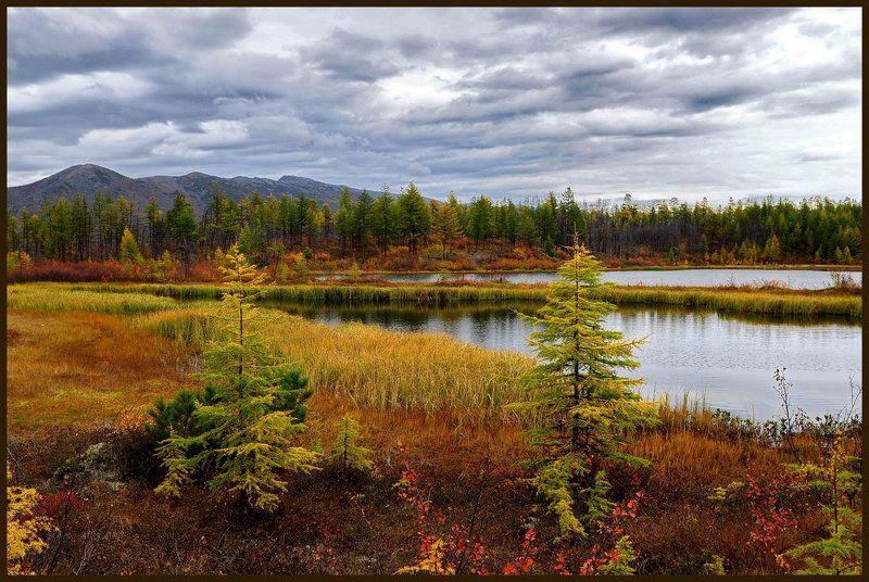 Осеннее торжествоphoto preview