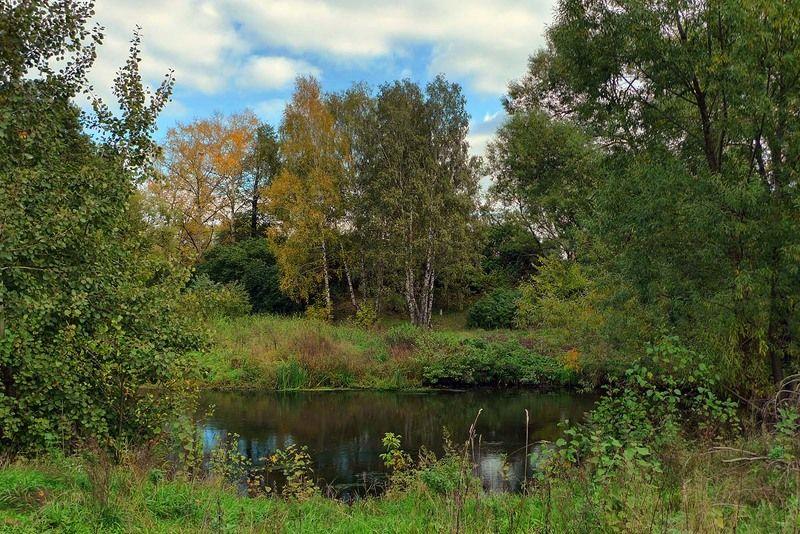 осень, полдень, река, пехорка, березы, ива, природа Осень на реке Пехоркаphoto preview