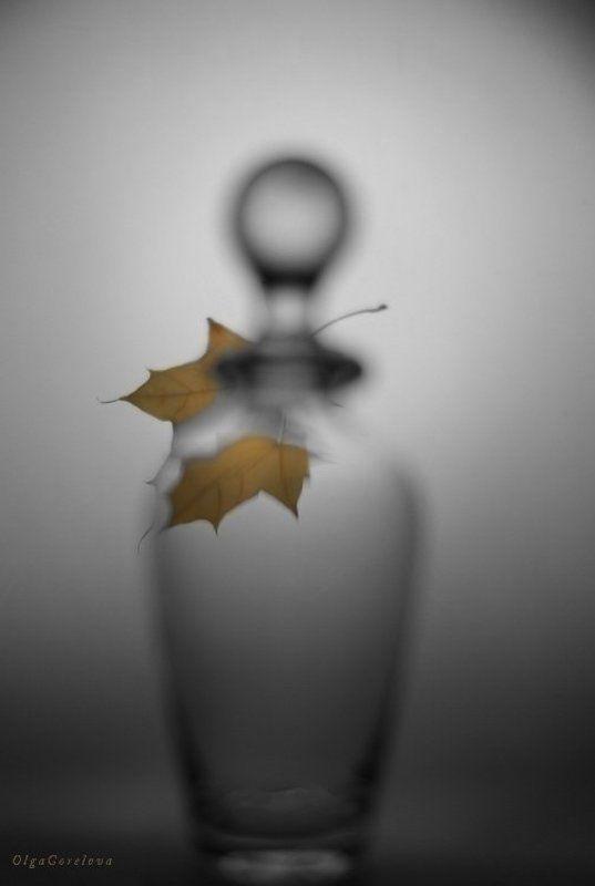 фото, лист, натюрморт, стекло, осень глоток осени 5photo preview