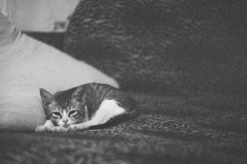 кот, диван, подушка честный котphoto preview