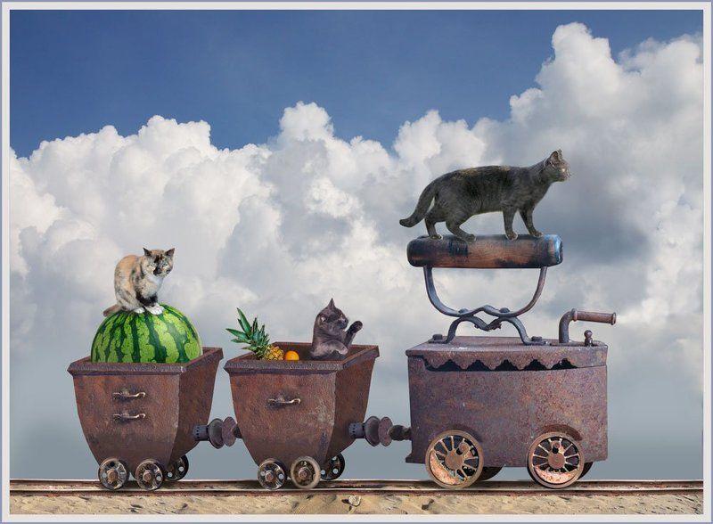 Кошачье путешествиеphoto preview