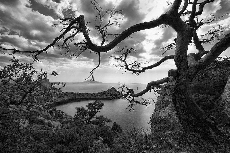 фото, пейзаж, юбк, новый, свет, дерево, море Лукоморьеphoto preview