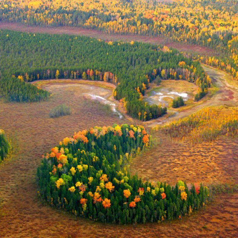 мотопараплан, сибирь, осень. Урманphoto preview
