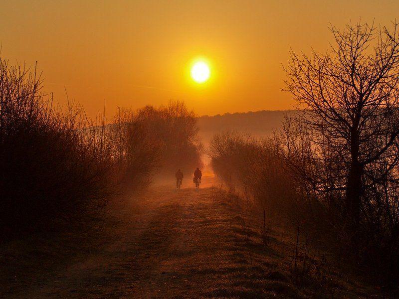 утро, весна, туман photo preview