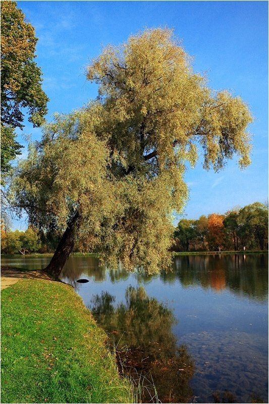 осень,озеро, Осеньphoto preview