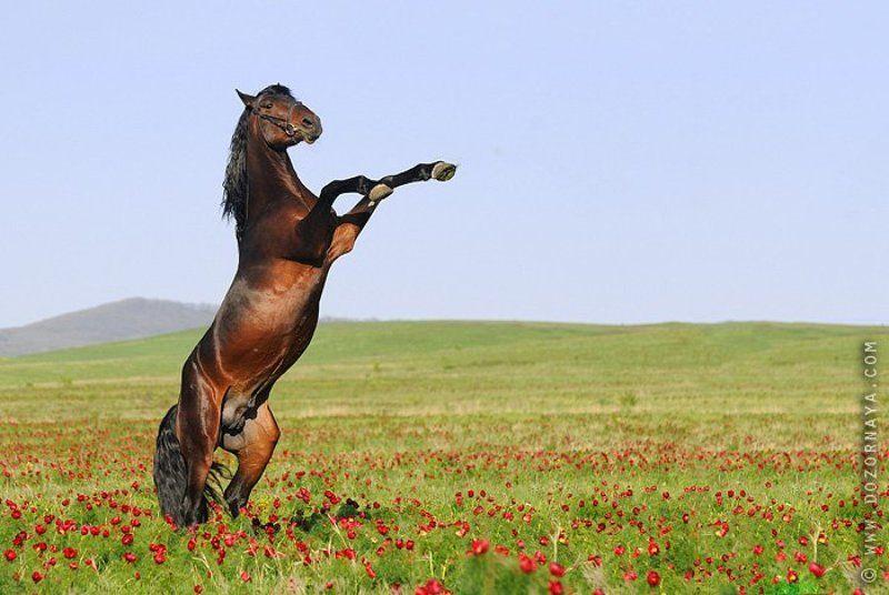 лошадь, цветы, поле Хозяин степиphoto preview