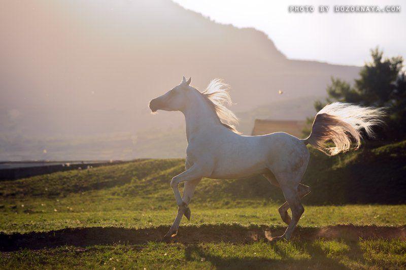 лошадь, закат Фениксphoto preview
