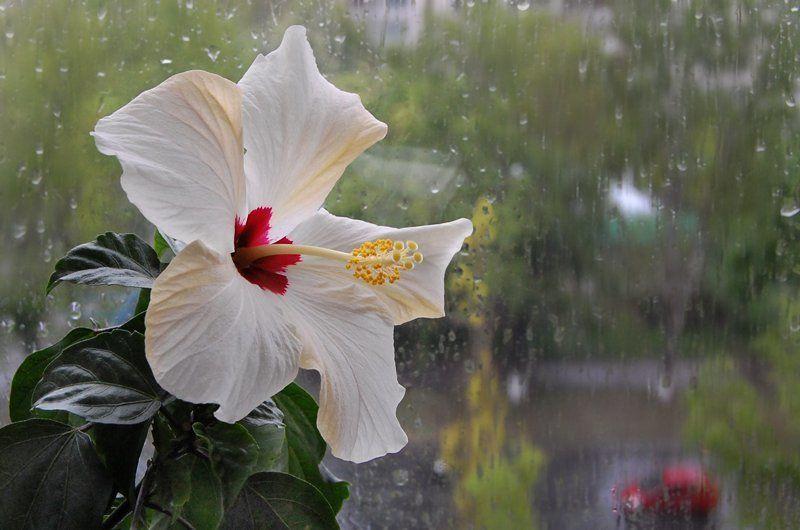на фоне летнего дождяphoto preview