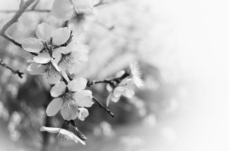 и такая веснаphoto preview