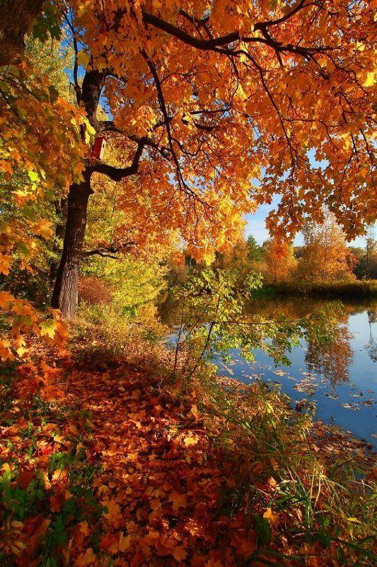 осень, пейзаж, фото, желтые, листья Очей очарованьеphoto preview