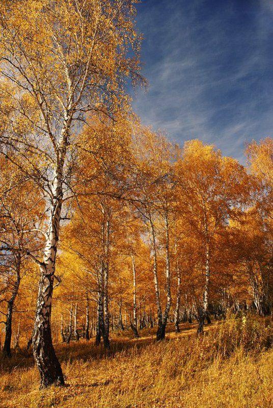 осень Осеннееphoto preview