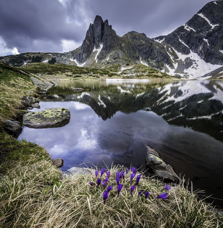 nature, landscape, mountain, flowers,water, lake,green, outdoor The heart of the mountainphoto preview