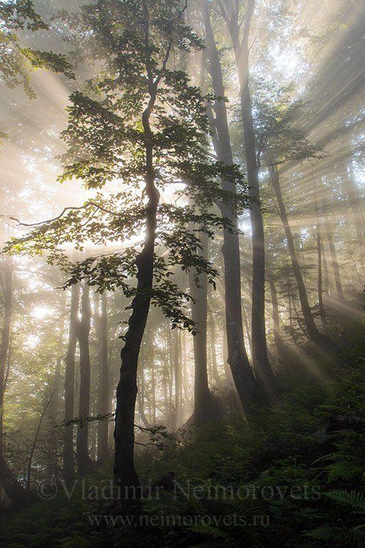 абхазия, восточный кодор, буковый лес, западный кавказ, western caucasus, abkhazia, eastern kodor, beech forest ***photo preview