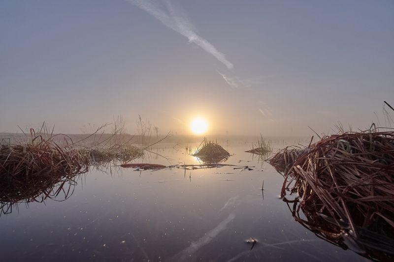 рассвет, пейзаж, природа, туман, свет, красота Утро туманноеphoto preview