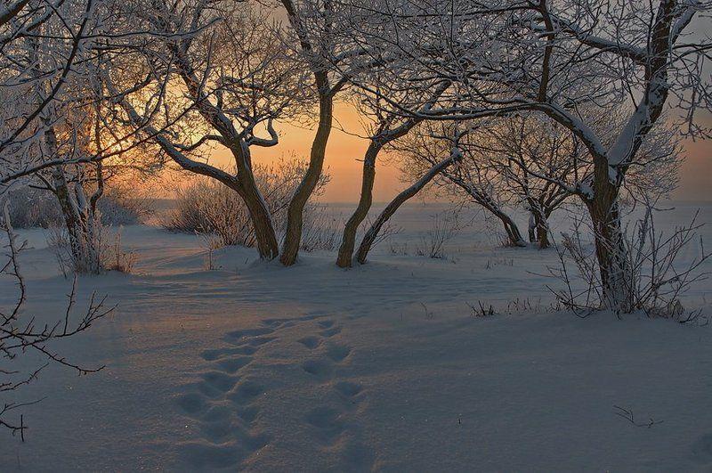 ... звуки тишины ... (репост 2011)photo preview