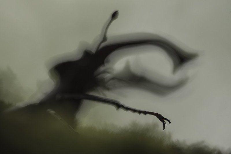 жук-олень ***photo preview
