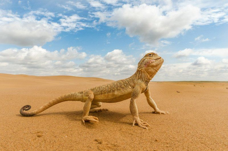 Ровесник динозавровphoto preview