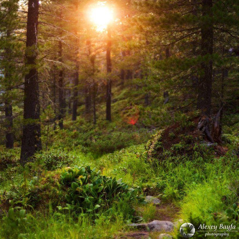 лес, сибирь, горы, лето, закат, солнце, тепло, тропа, сказка Тропа в сказкуphoto preview
