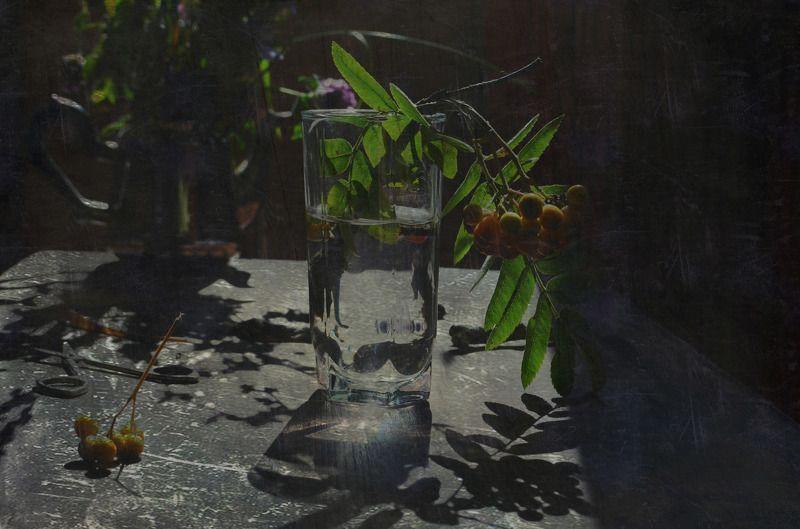 рябина Летняя рябинаphoto preview