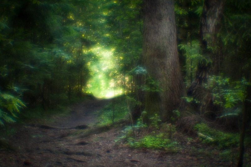 В лесной глушиphoto preview