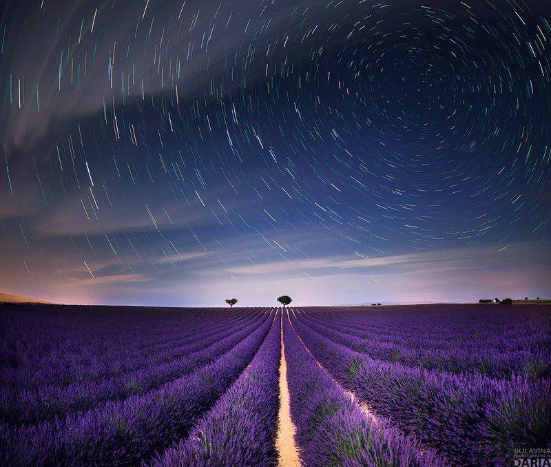 лавандовое поле,  лаванда,  прованс, франция, звезды,  звездное небо Лавандовые поля Провансаphoto preview