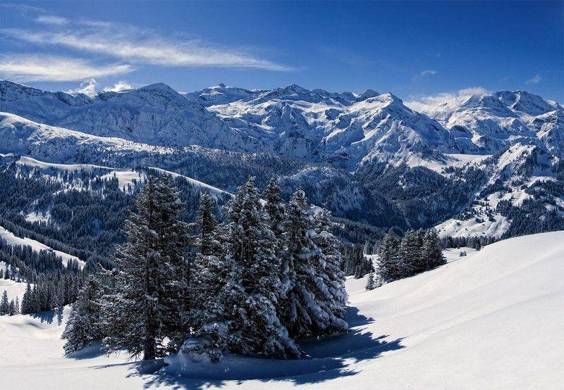 горы, снег, ель Край голубых елейphoto preview