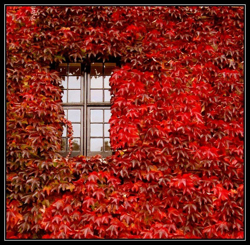 cambridge,england Ещё одна осеньphoto preview