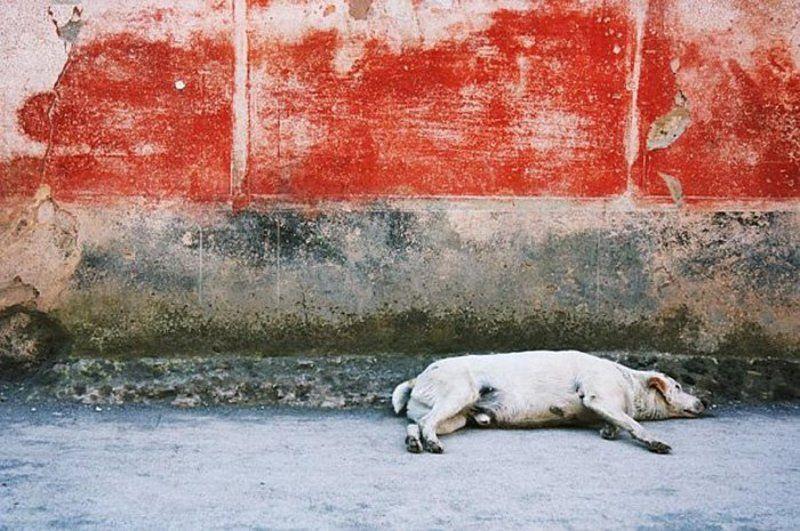 Помпейская собакаphoto preview