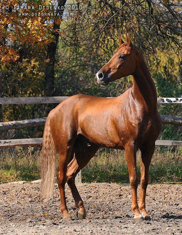 лошадь, осень В осеннем цветеphoto preview