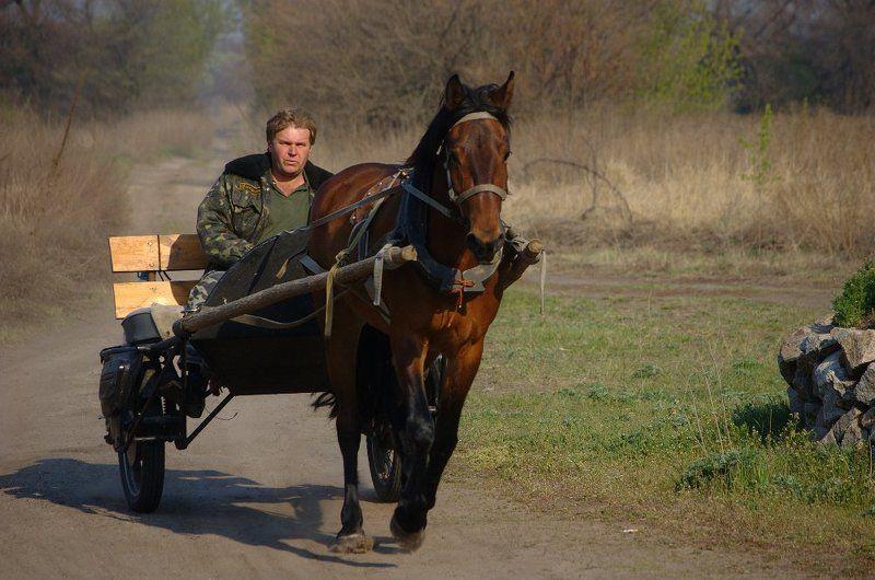 лошадь, повозка рысью...photo preview