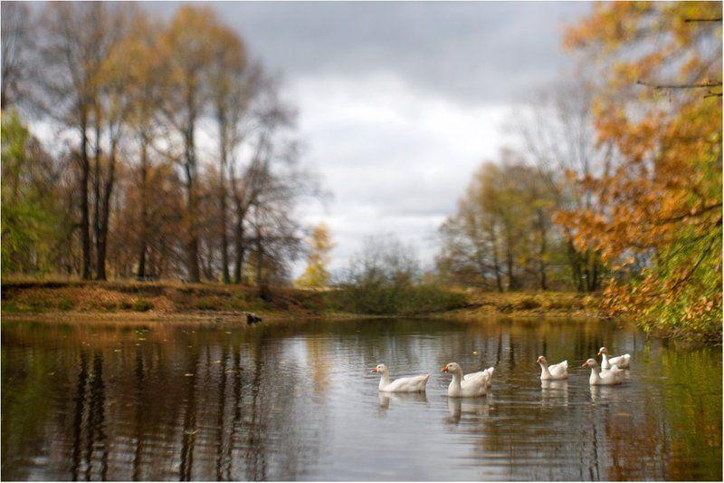 гуси-лебеди Тильт-уткиphoto preview