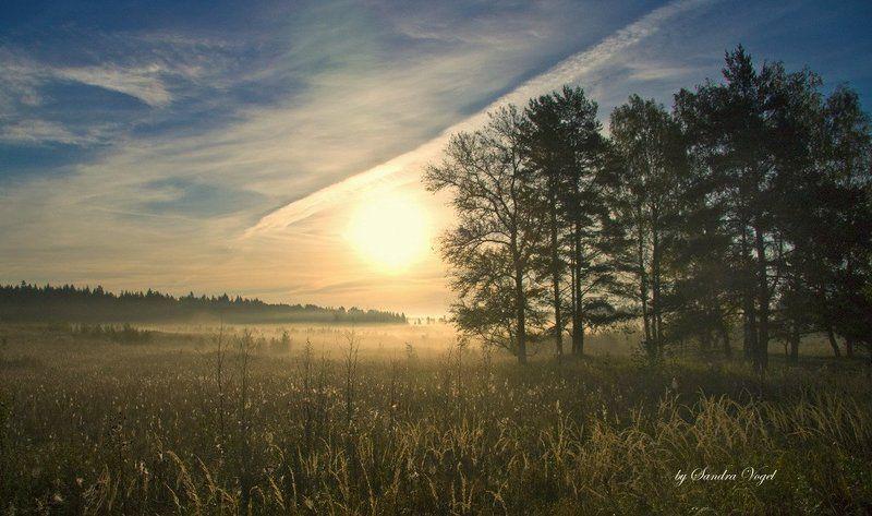 утро, туман Morningphoto preview