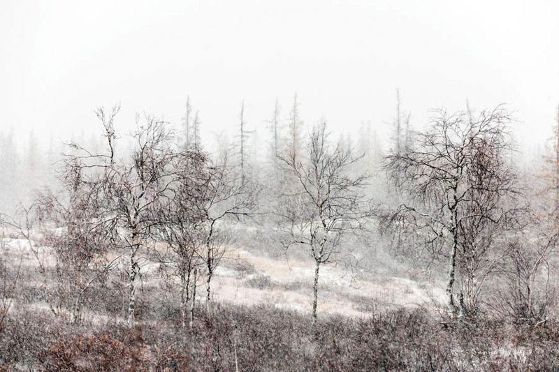 природа, север, осень, пейзаж, серия первооктябрьский снегphoto preview