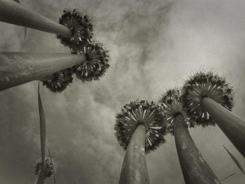 макро,пальмы пальмыphoto preview