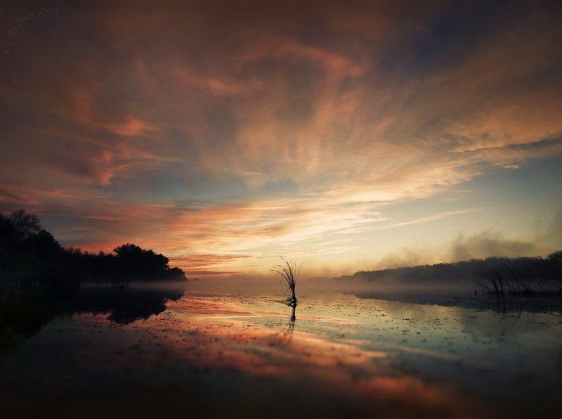 тишина, утро, рассвет, озеро, камыш Собирая тишину.photo preview