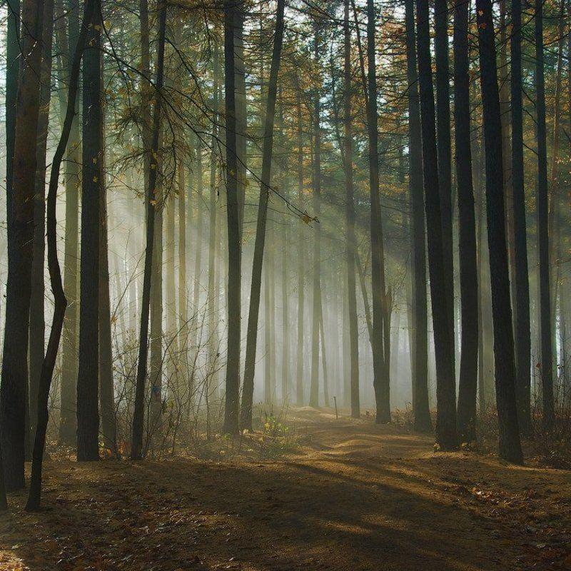 Утро, в парке ни душиphoto preview