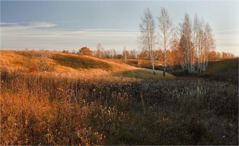 осень, березки, вечер Осенний вечерphoto preview