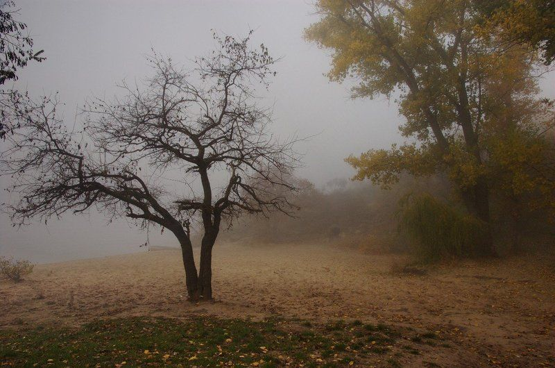 пляж, осень, туман, деревья, настроение, дымка осенний пляжphoto preview