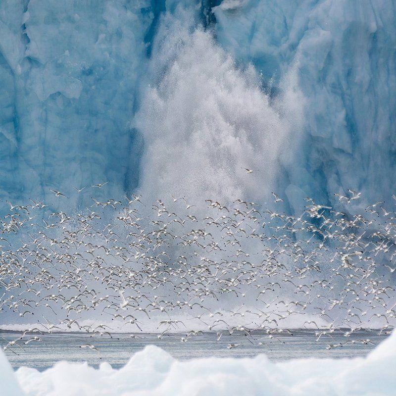 шпицберген, ледник, птицы Откололась льдинаphoto preview