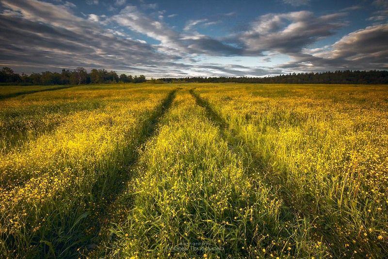 пейзаж, природа, кольский полуостров, полярный день, цветы Последние ночи полярного дняphoto preview