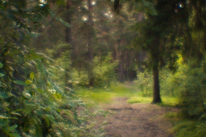 фото, природа, лес, монокль, пикториализм, дубна, россия После дождяphoto preview