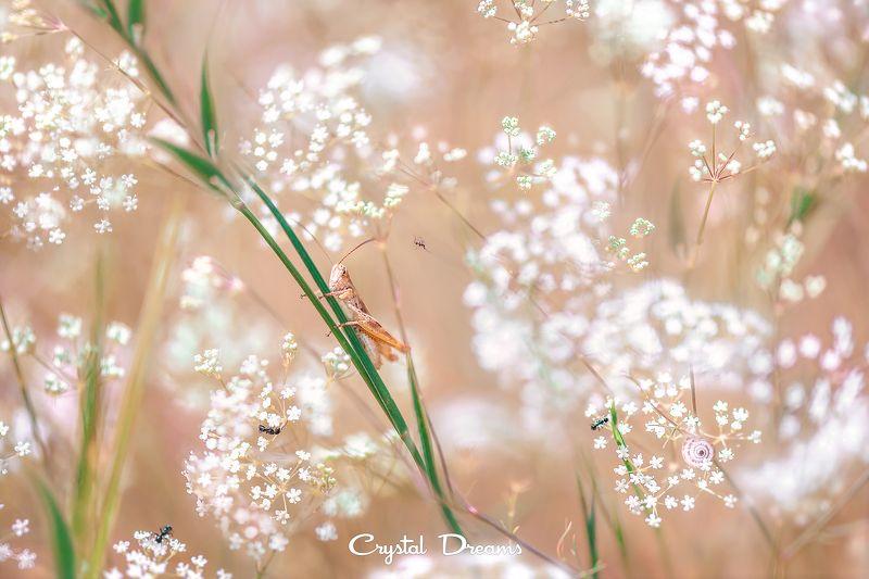 crystal dreams, macro, spring, color, art, nature, кузнечик \