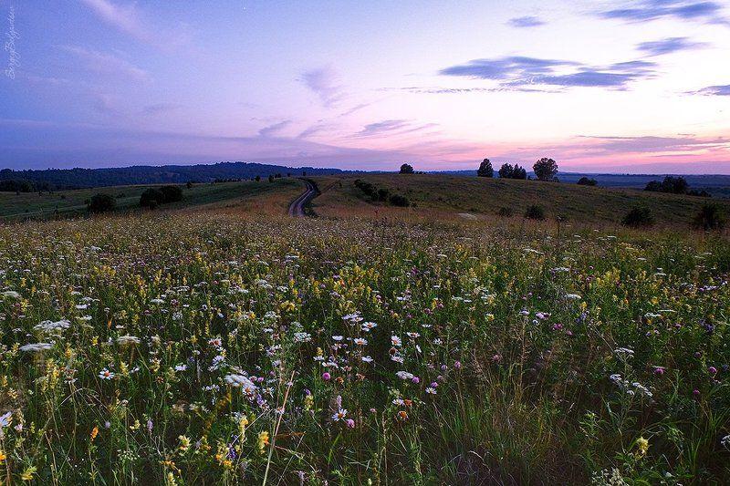 fujifilm, x-m1, fujinon 16-50mm f/3.5-5.6, поляна, закат, вечер, небо, лес, тайга, цветы, трава, ромашки, hdr * * *photo preview