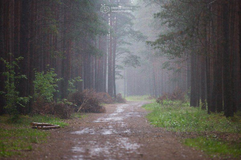 Лес во время грозыphoto preview