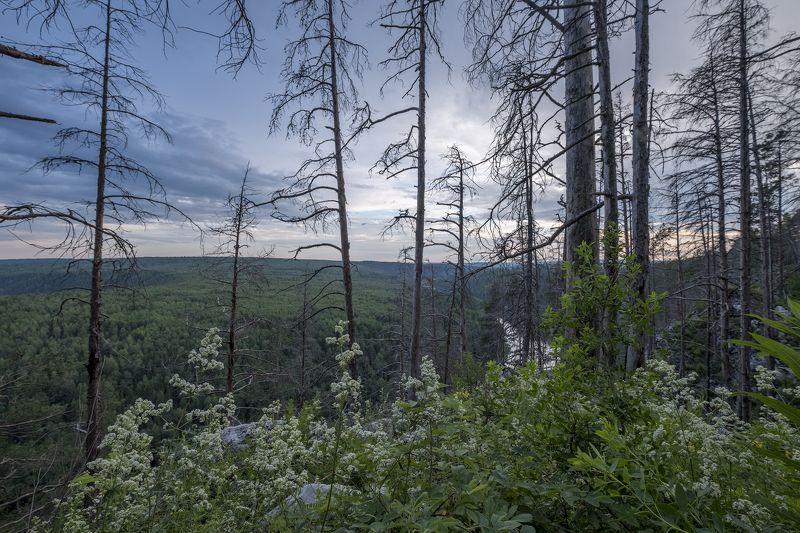 вечер, лес, сухостой, тайга, закат, лето, Чусовая Возрождениеphoto preview