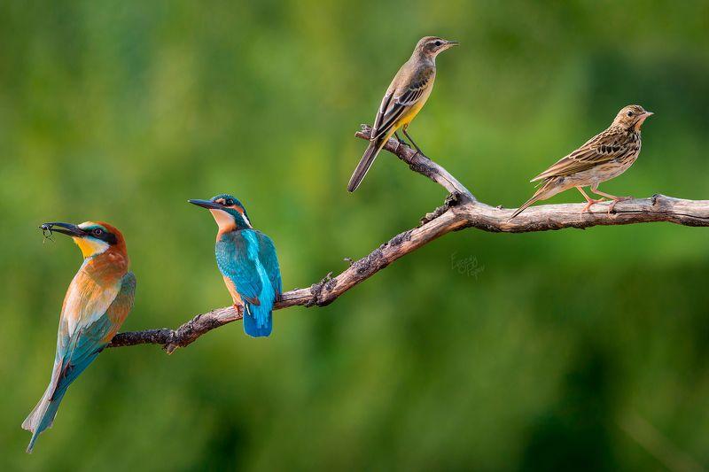 птицы, фотоохота, Степные сюрпризыphoto preview