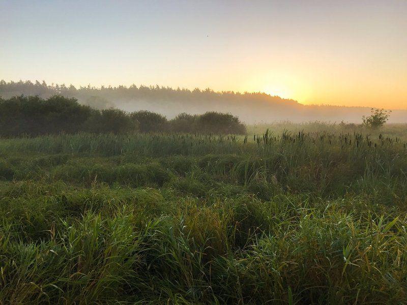 Ранним утром (мобильное фото)photo preview