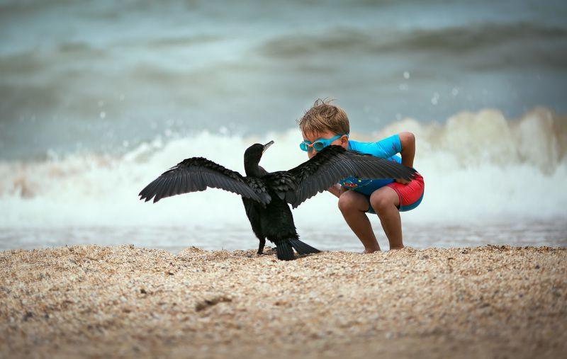 море берег песок пляж птица баклан вода лето солнце ребенок Мужской разговорphoto preview