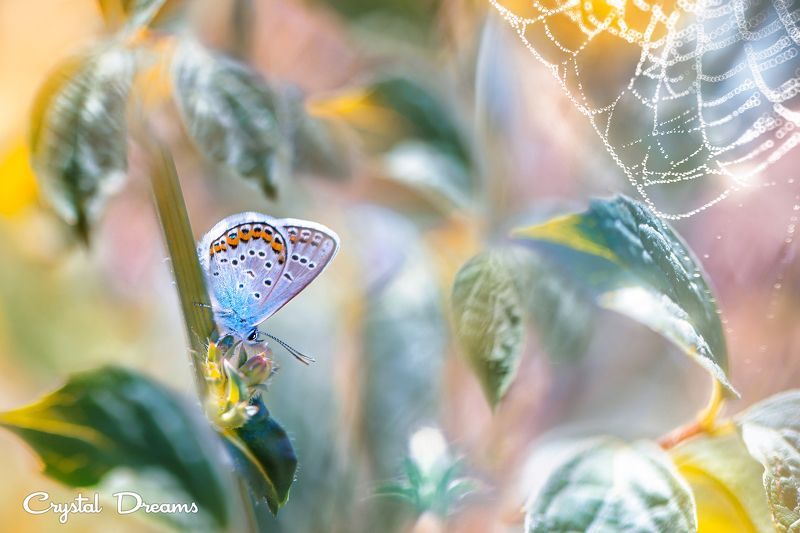 crystal dreams, macro, summer, color, art, nature, butterfly In the country of colorphoto preview